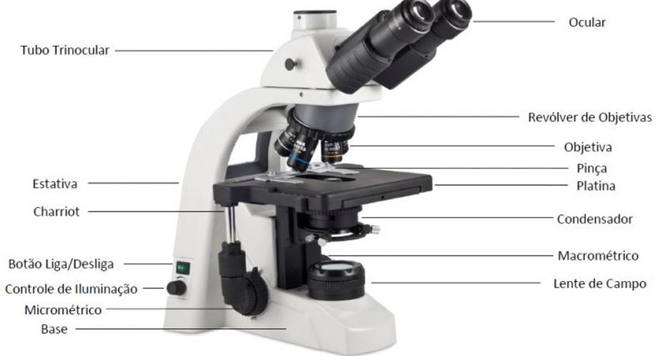 Procedimento para focalização no microscópio